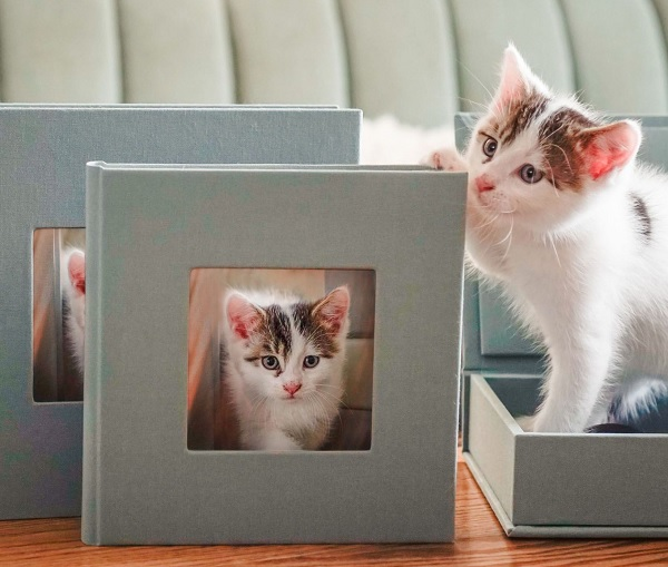 best print products for pet photographers
