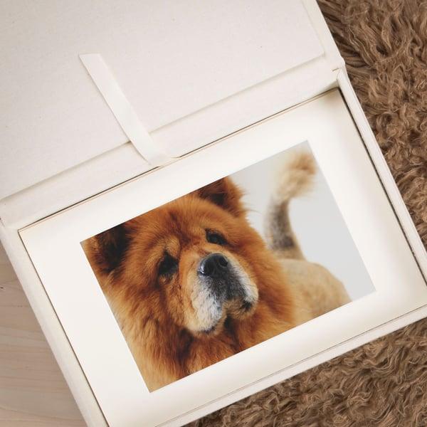 Folio Box Dog