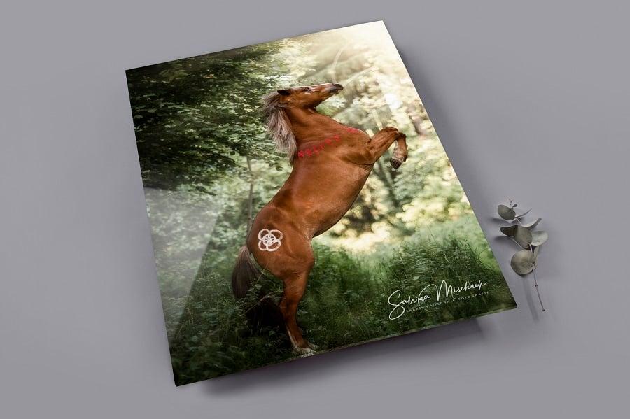 HIntergrund Pferdefotografie Fotoalbum Einband