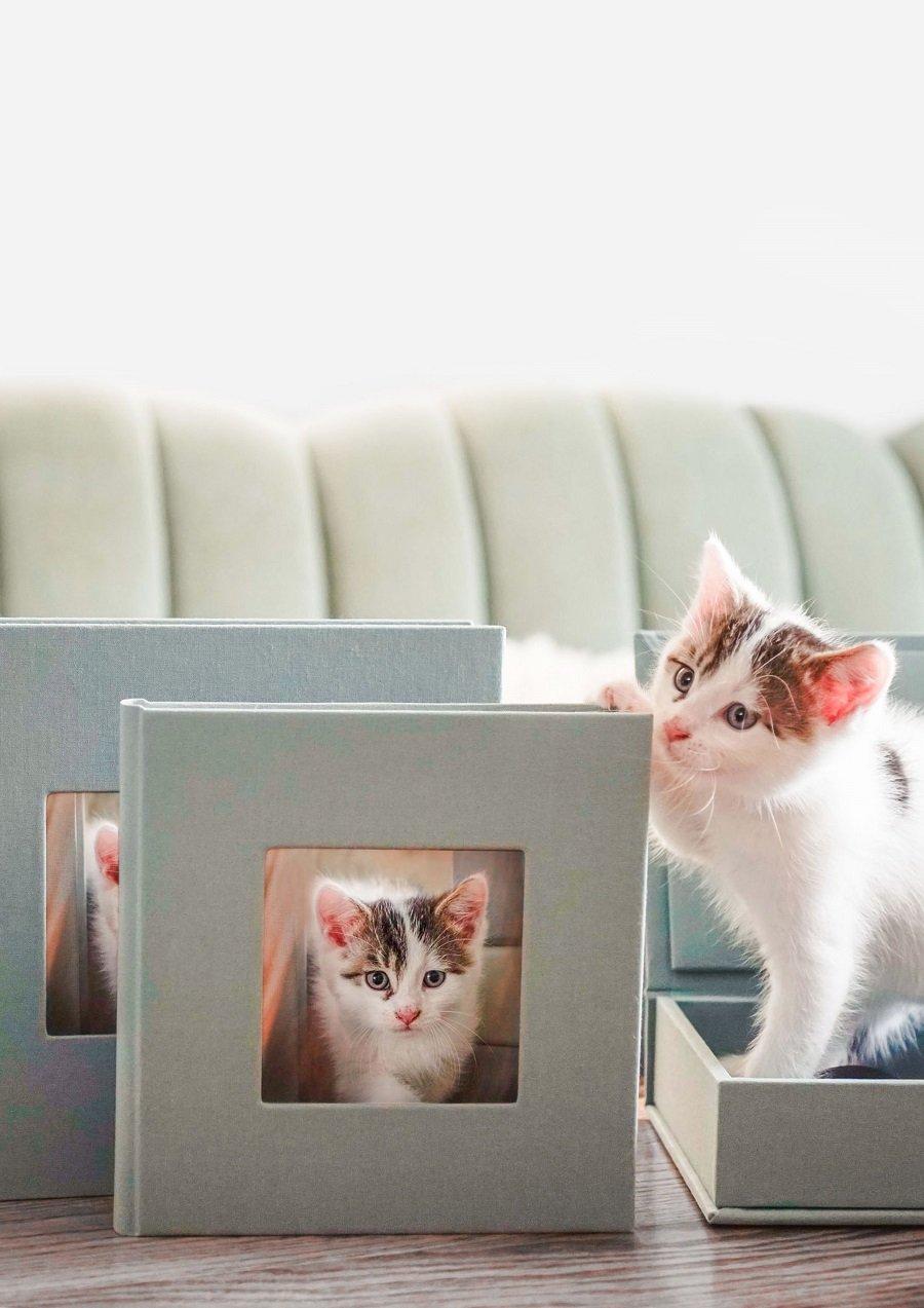 katzenbilder fotobprodukte