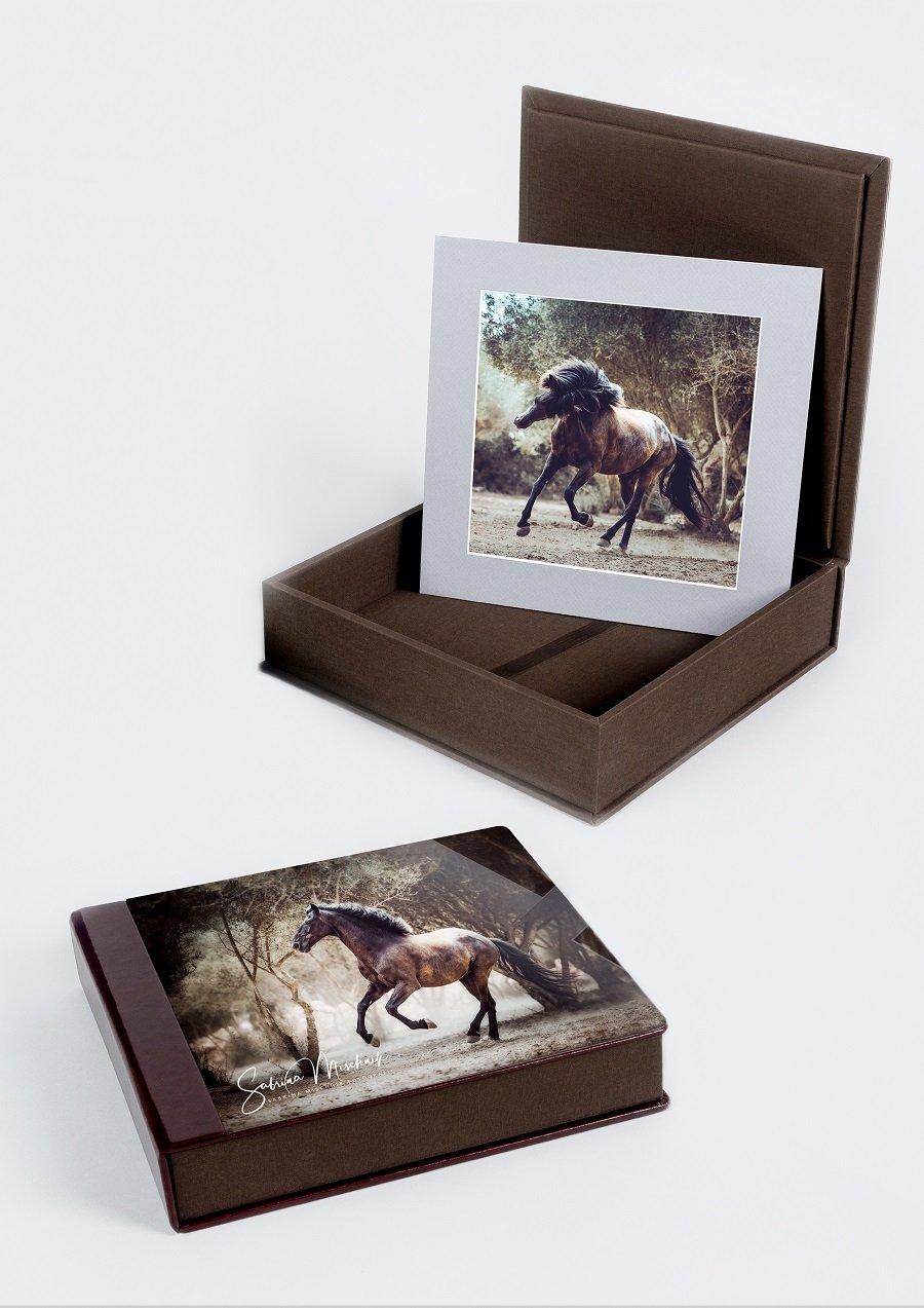 passeparotut box pferdefotografie