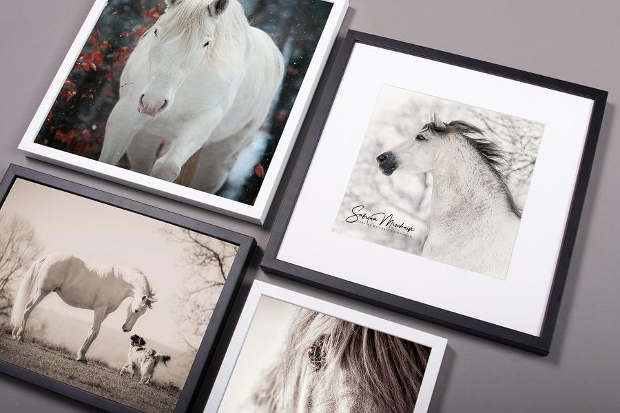 pferdefotografie tierprotrait