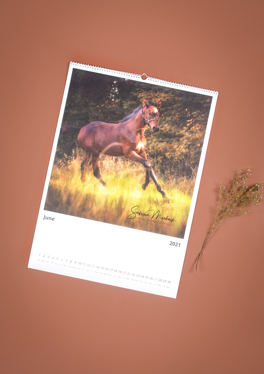pferdefotokalender