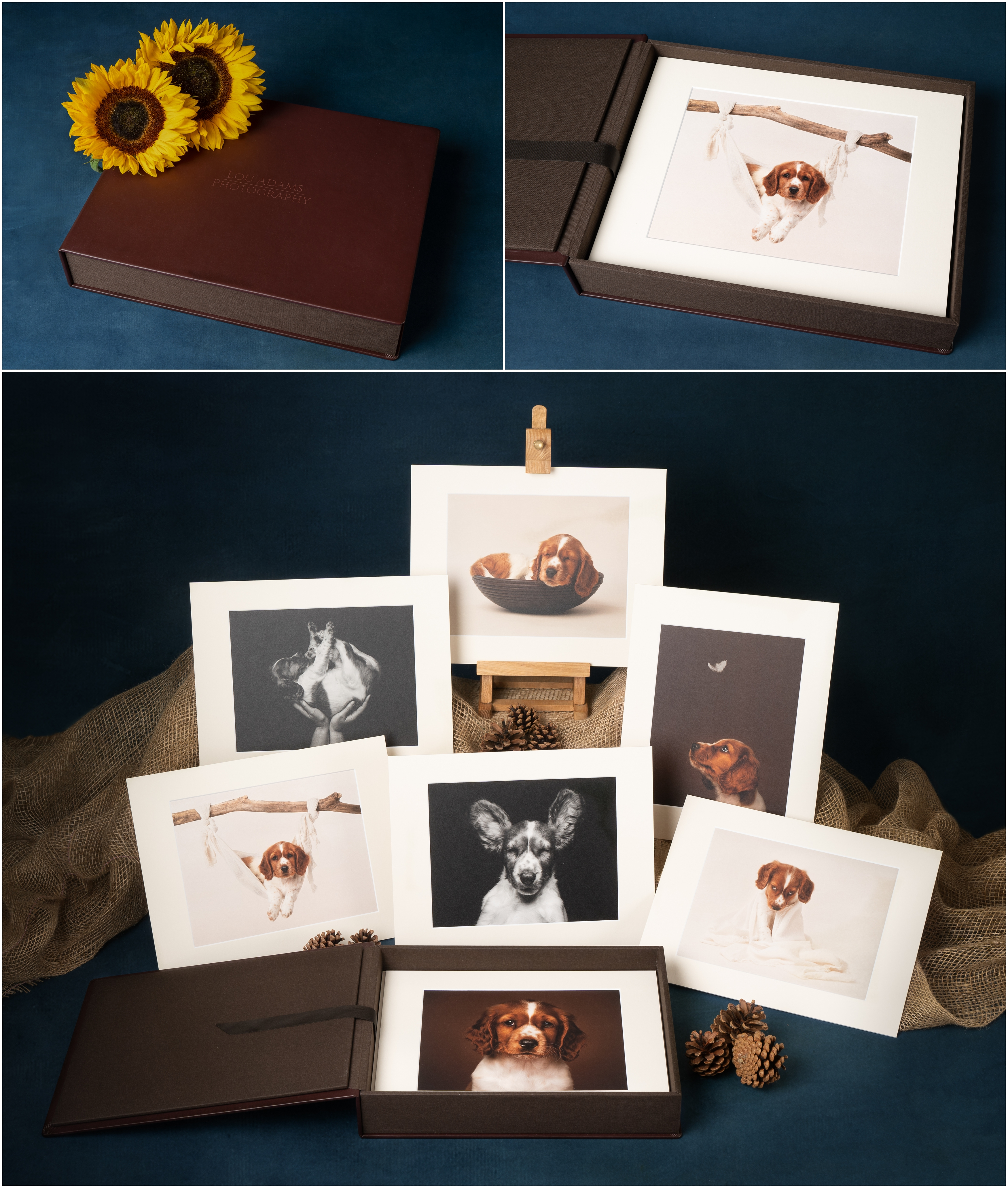 nPhoto  pet photography products Lou Adams Photography