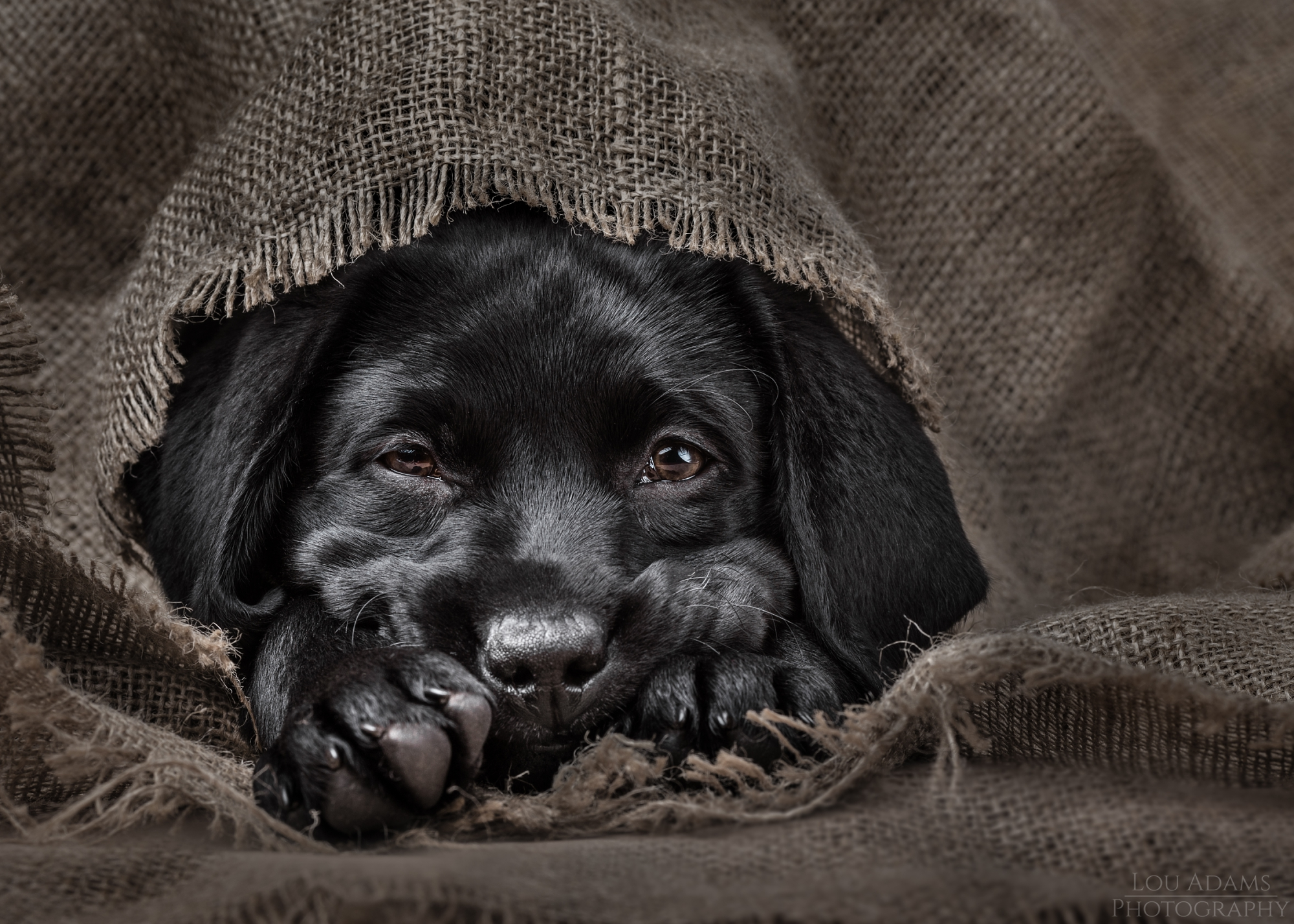 Lou Adams Photography dog