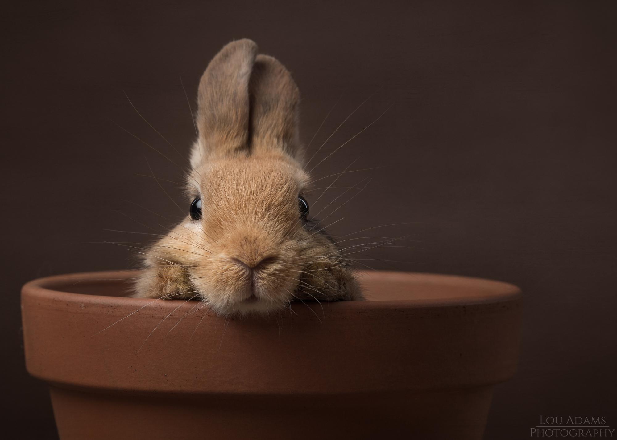 Lou Adams Photography rabbit