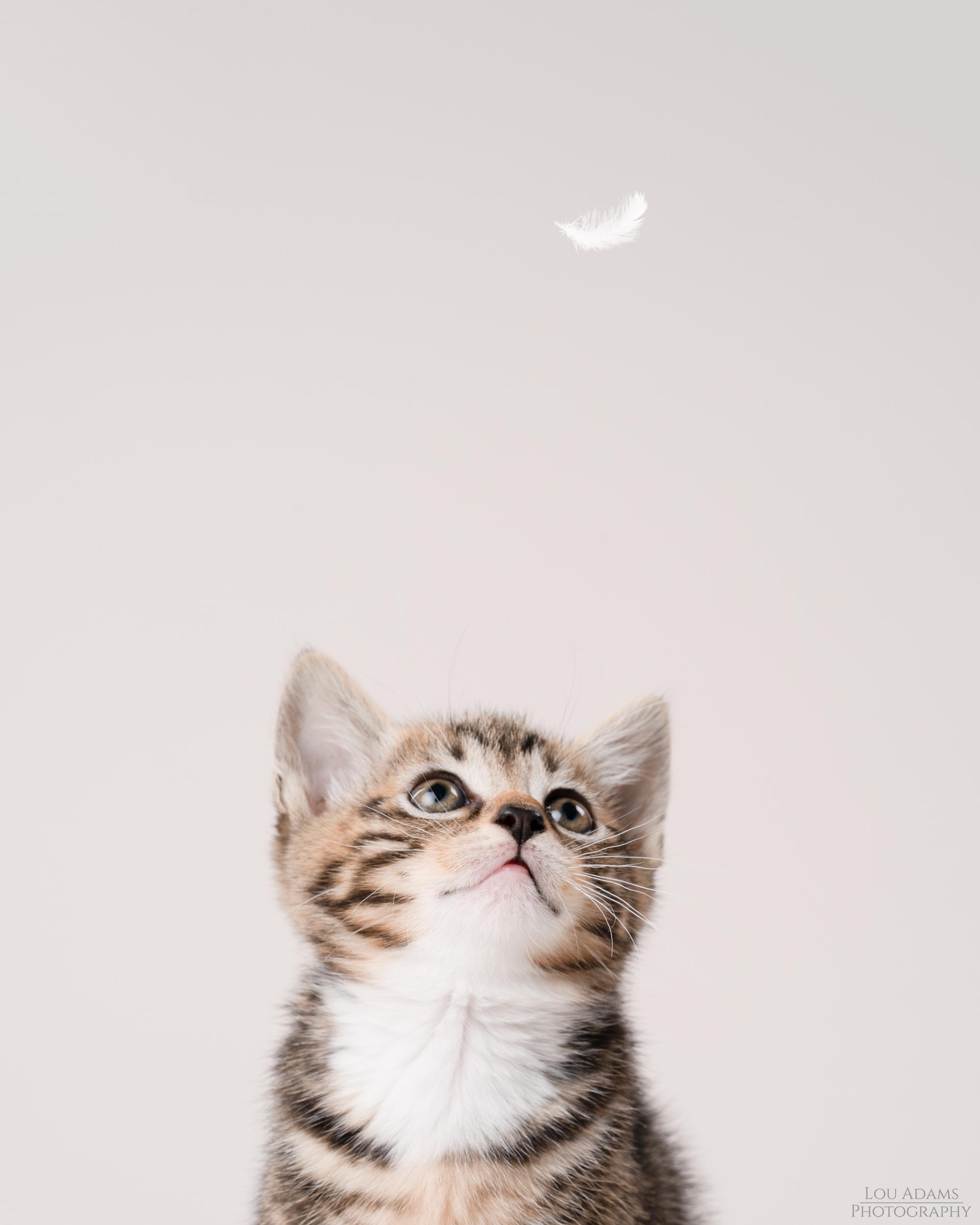 Lou Adams Photography cat