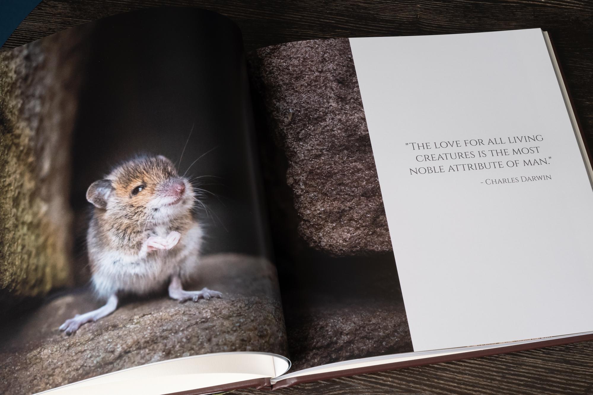 nPhoto Photo Book Pro Lou Adams Photography