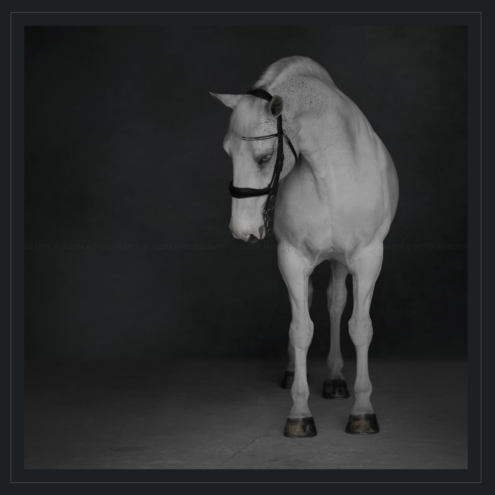 Scotia M Photography Pro Equine Photo