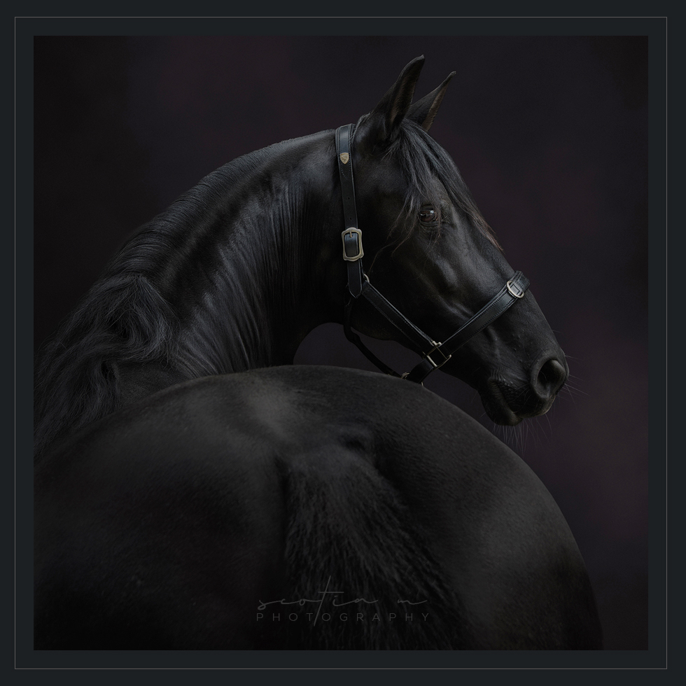 Horse and Equine Photography by Scotia M Photography