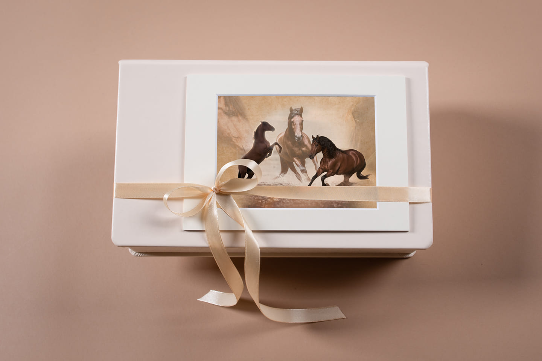 Folio Box für professionelle Tierfotografie