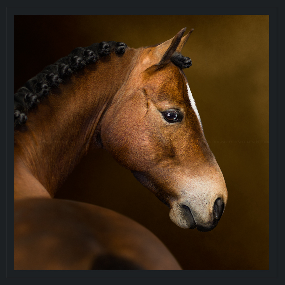 Horse Photography by Scotia M Photography