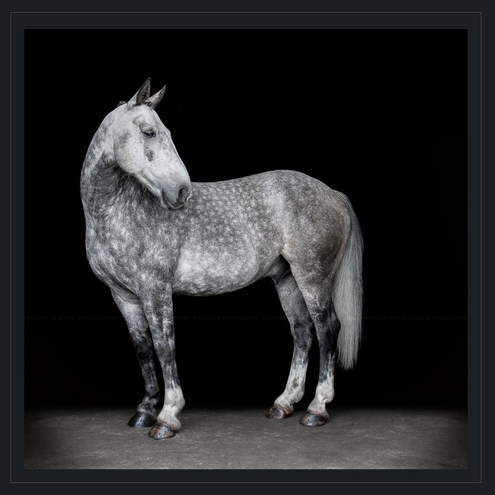 Featured Photography Scotia M Photography Equine Photos