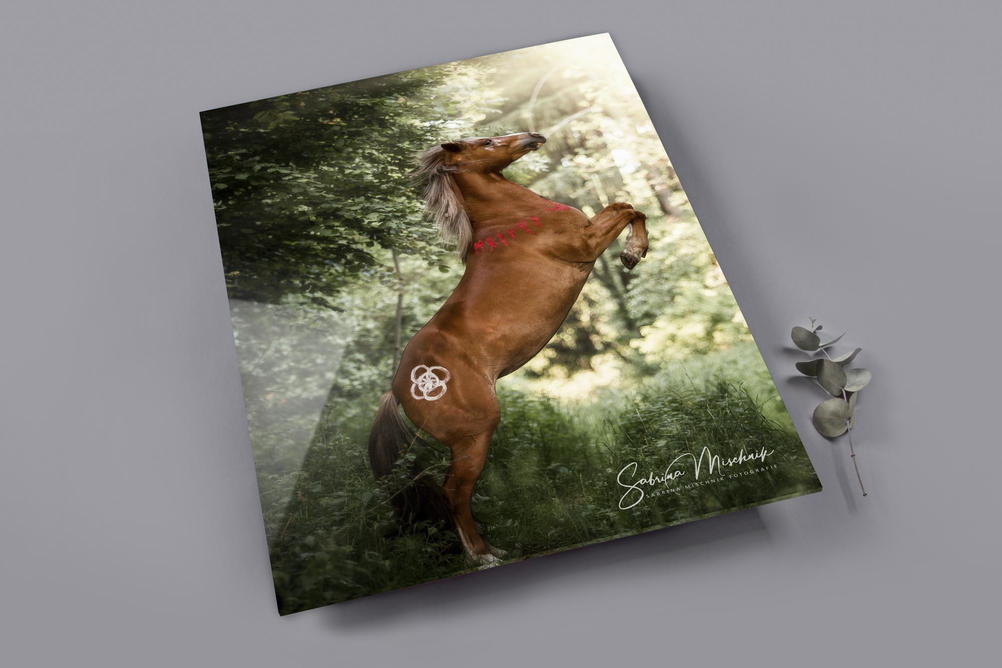 acrylic equine photography print