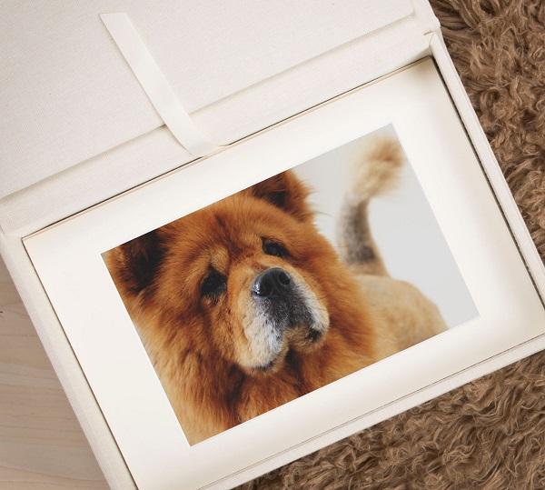 Folio Box Best Pet Product
