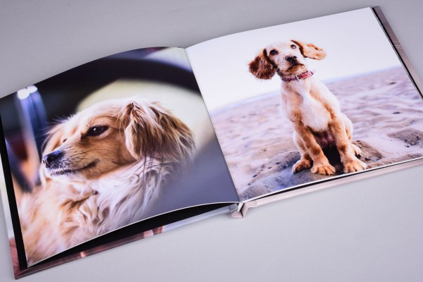 Photo book in 4K for Pet Photography