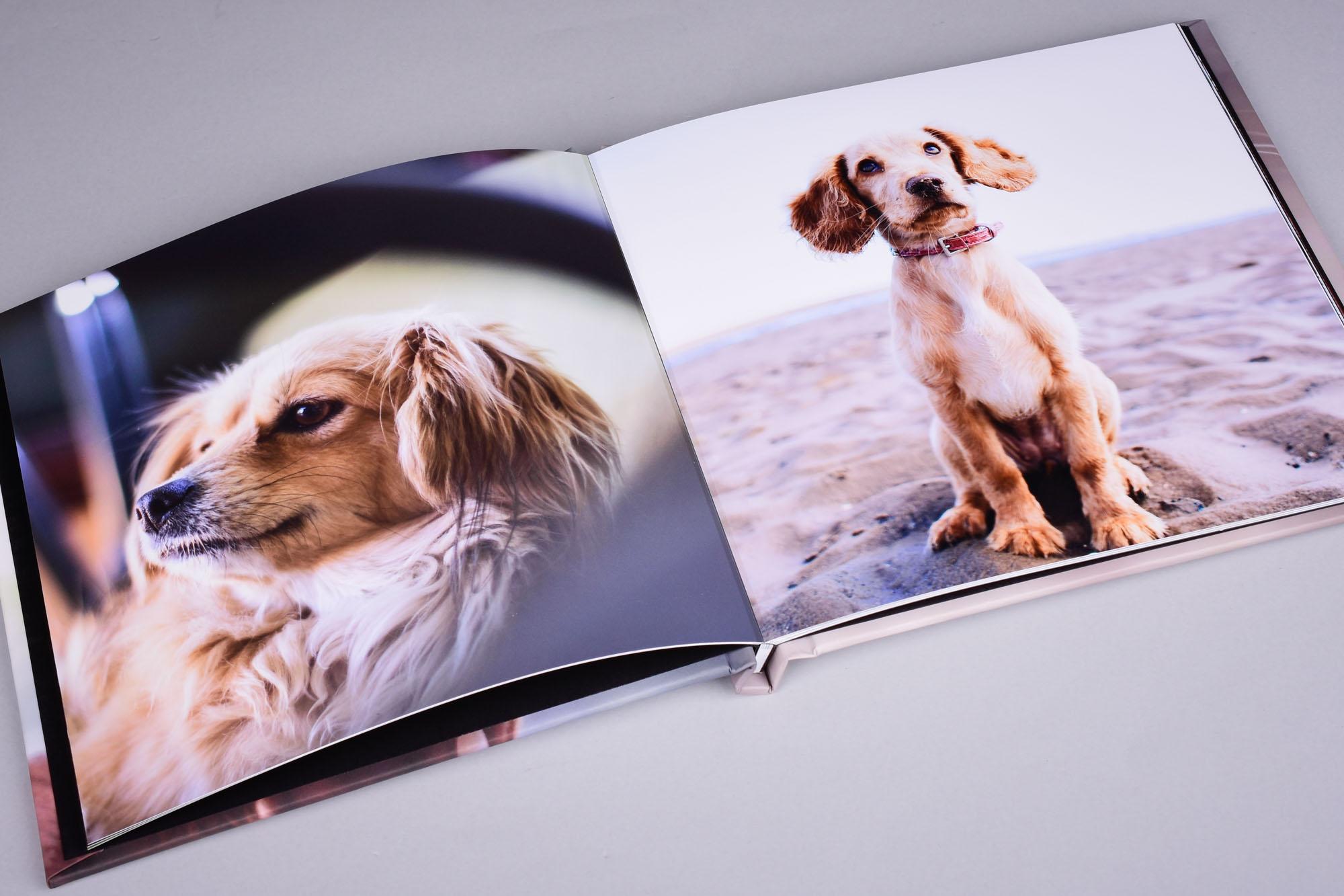 DreamBook 4K - Pet Photography