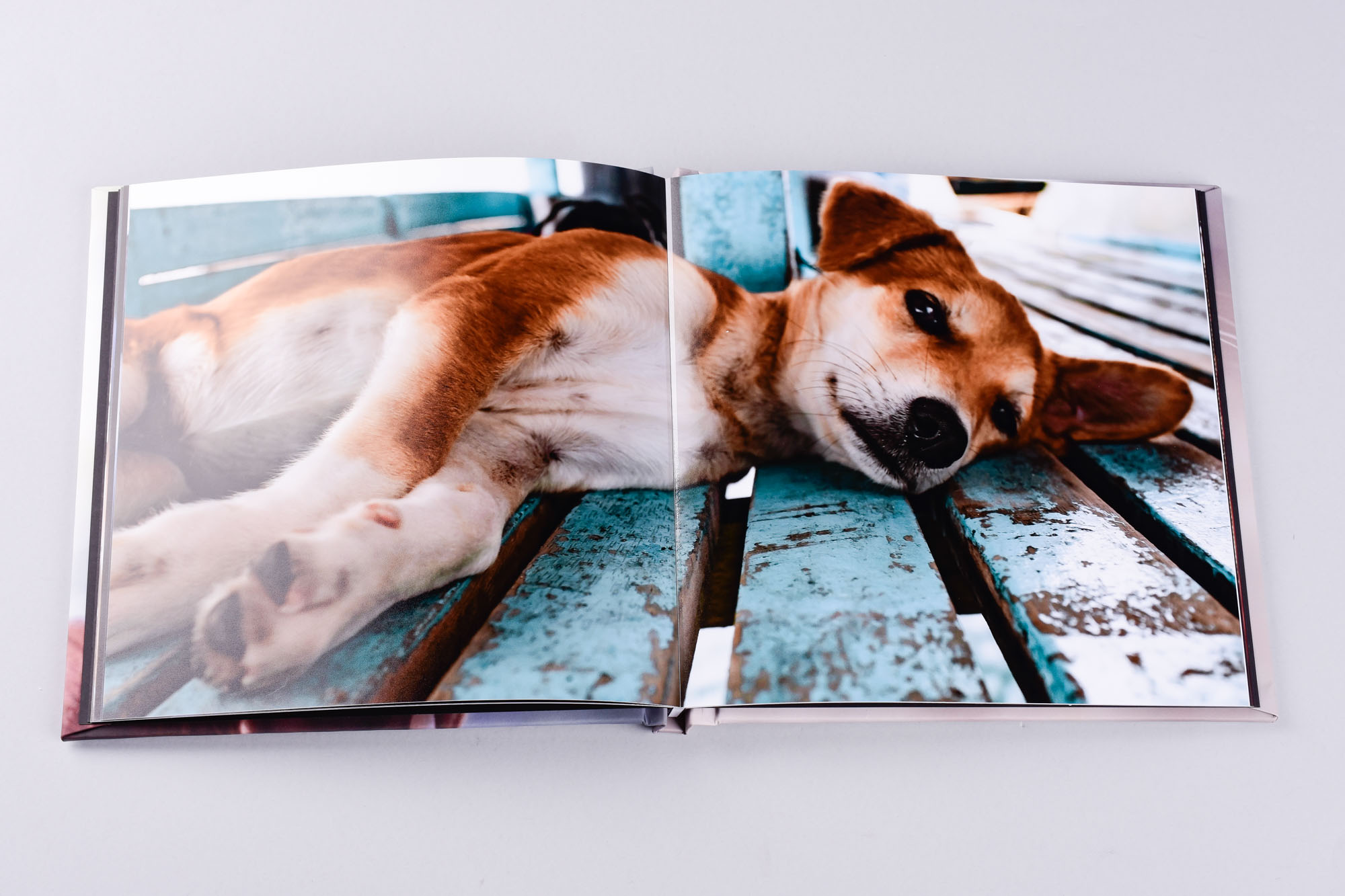 dog photography in photo book