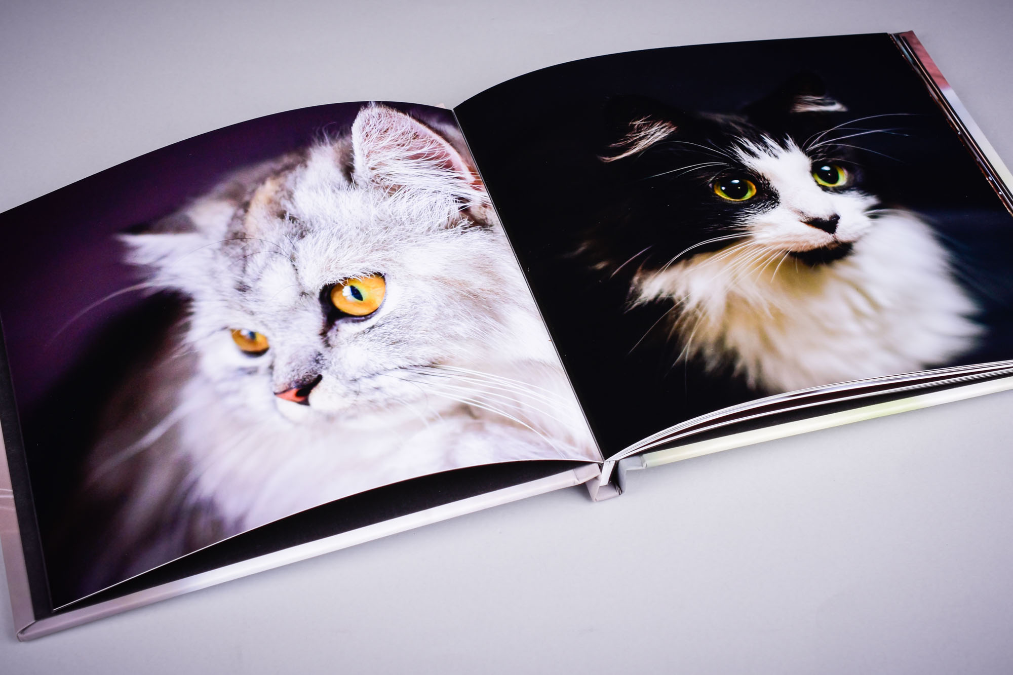 professional photo book in 4K