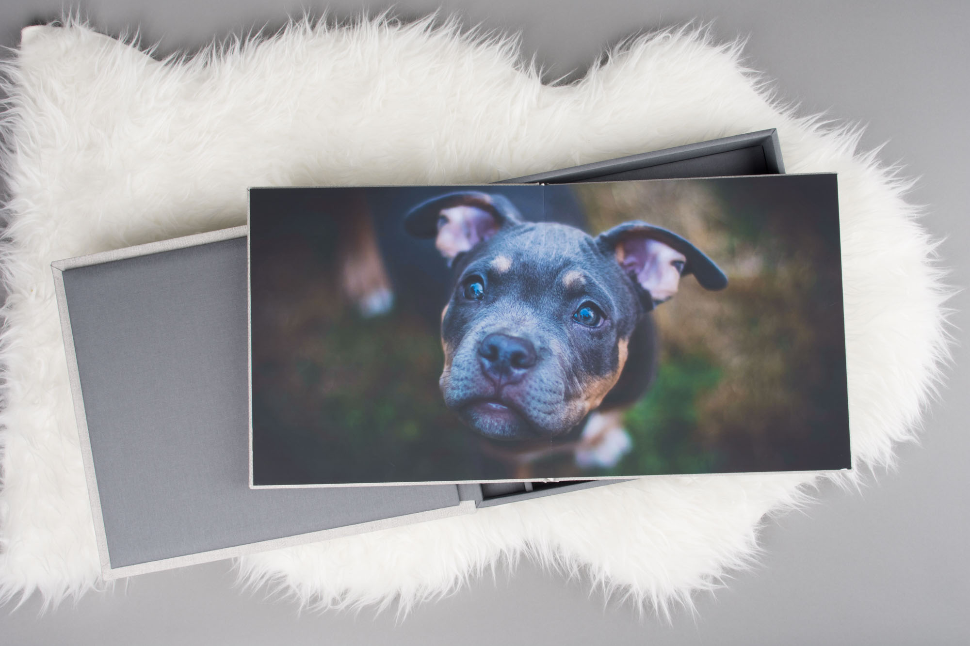 pro photo album and box for pet photographers