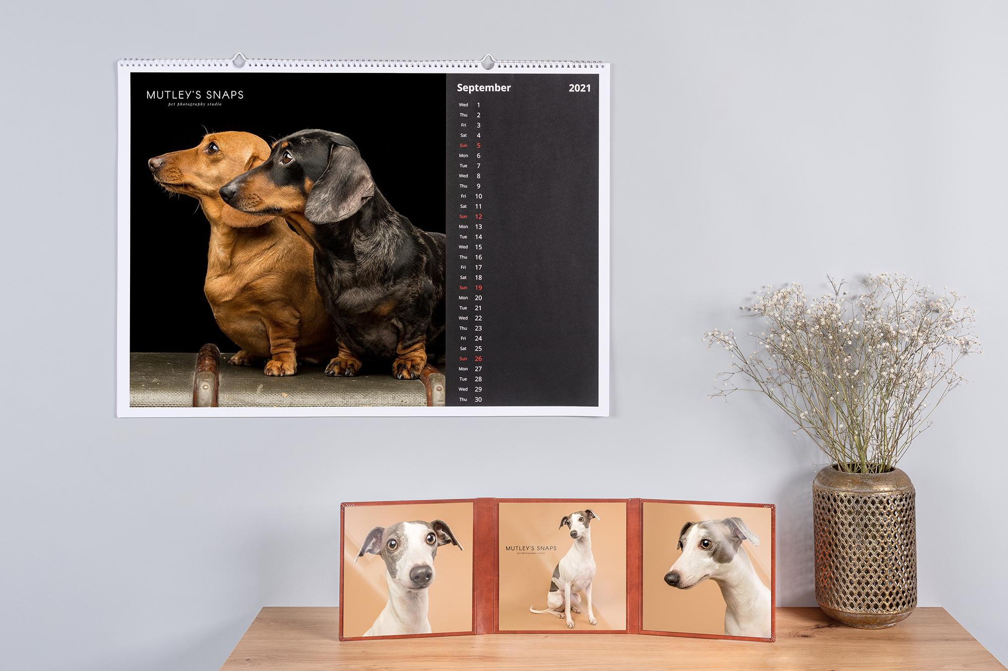 Dog Photography Calendar and Prints