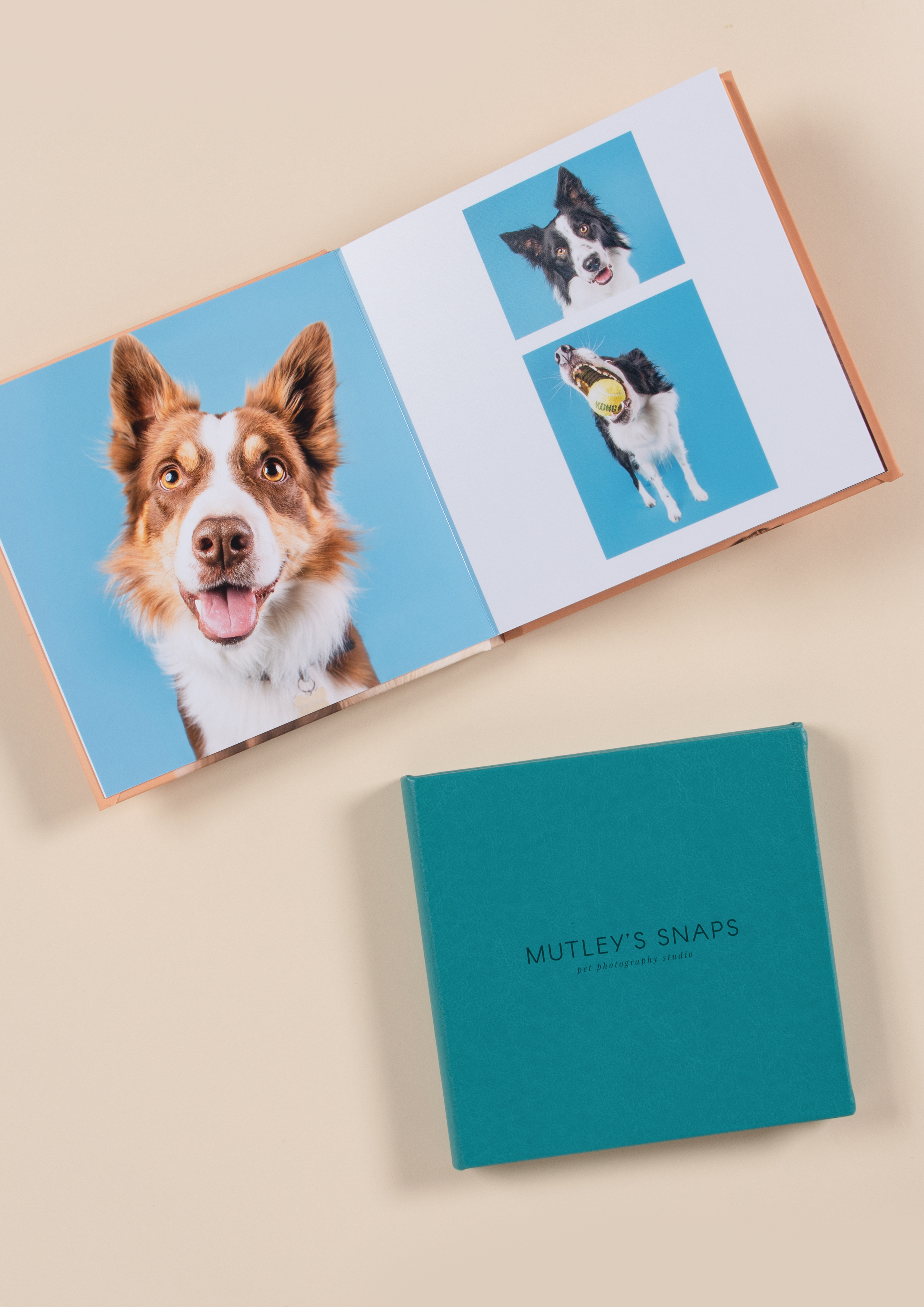 dog photography in a professional album
