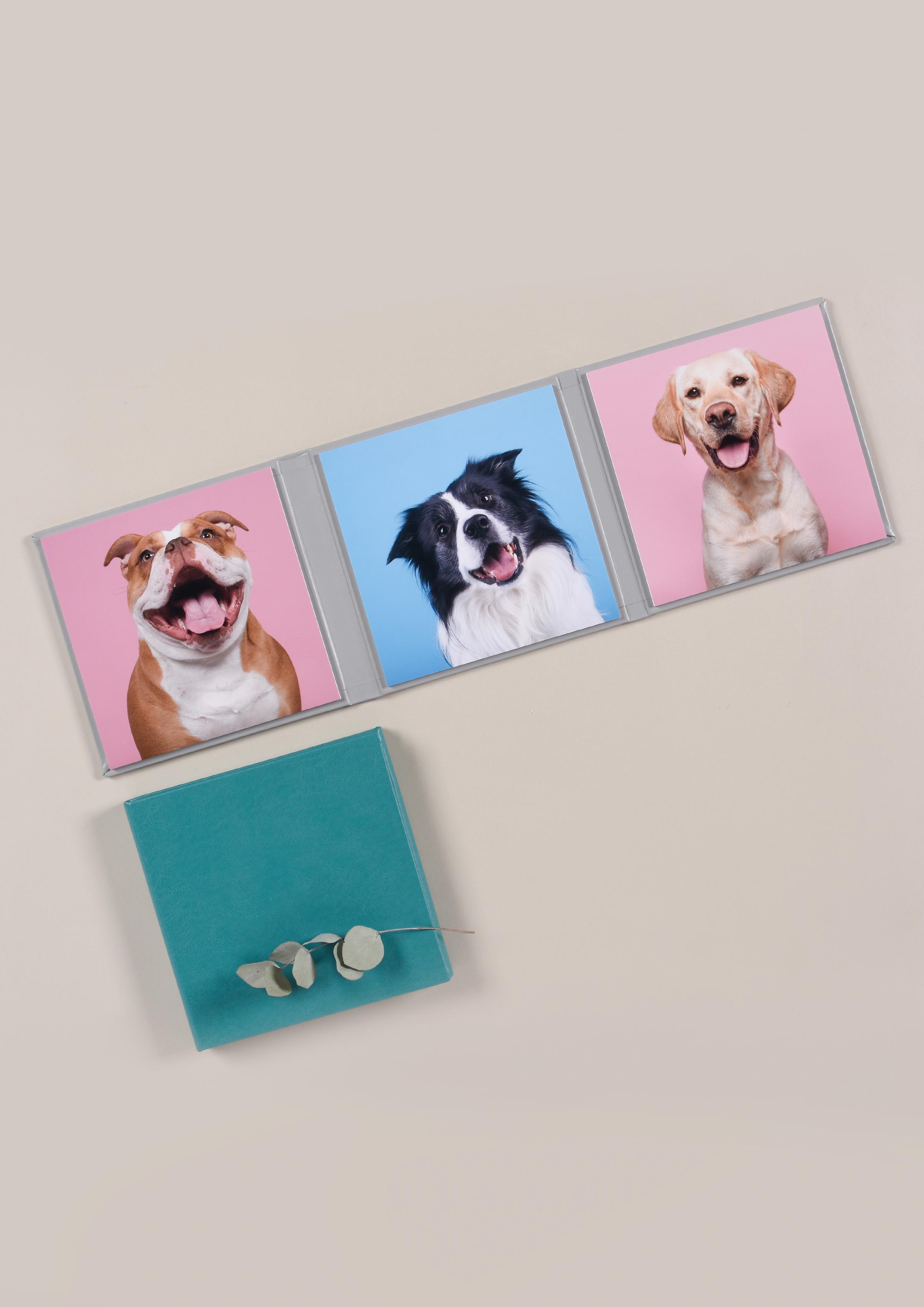 Professional Pet Photography Dog Prints