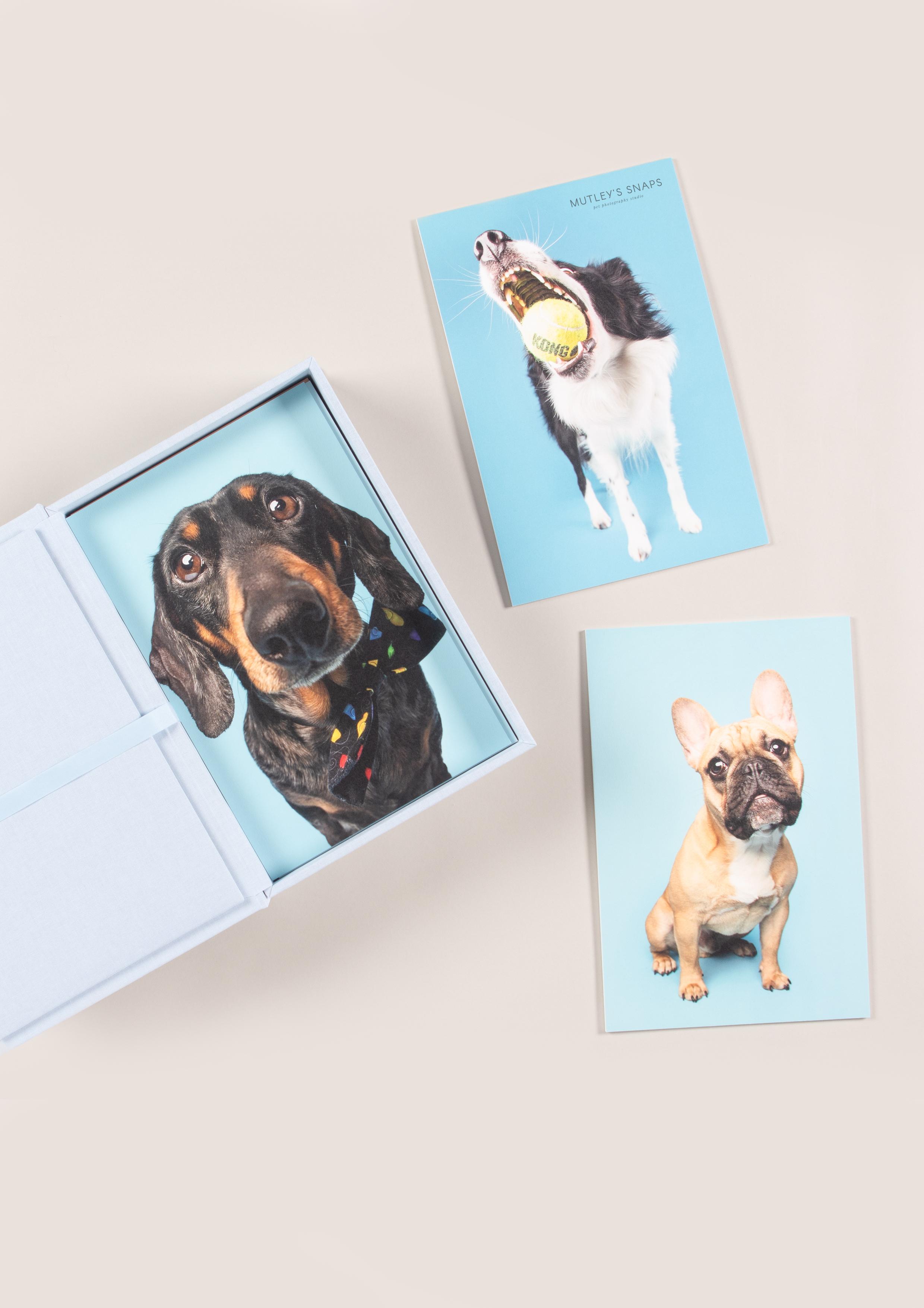 animal portraits in professional prints
