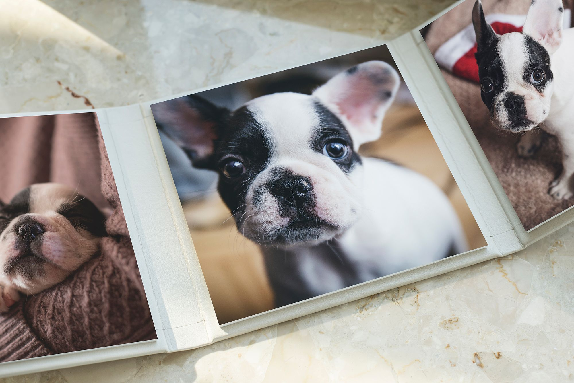 Triplex - Pet Photography